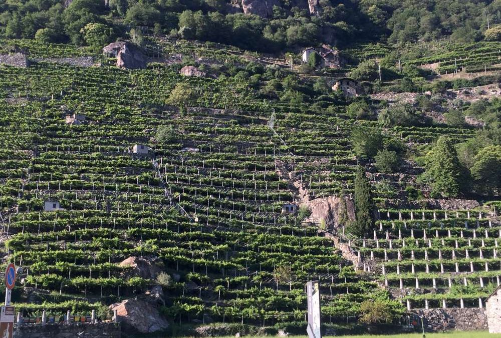 Viticoltura eroica e le eccellenze della Bassa Valle d'Aosta
