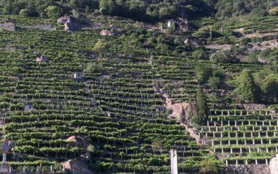 Le eccellenze della Bassa Valle – Visite con degustazioni