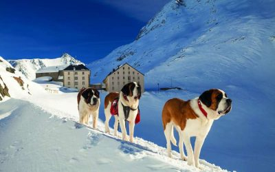 Désalpe des Barry, la festa dei Cani San Bernardo – Settembre