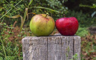 Festa delle Mele Renette a Gressan – mese di ottobre